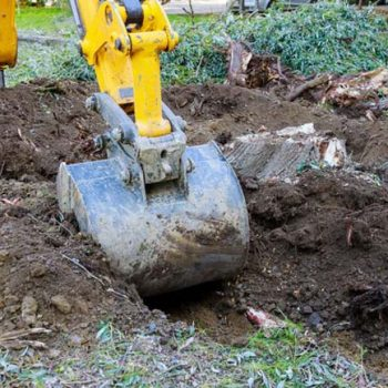 Tree root removal, maintenance, inspection, repair and replacement